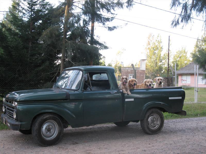 Venta Auto Usado Ford F 100 Twin I Bean 1966 Color Verde